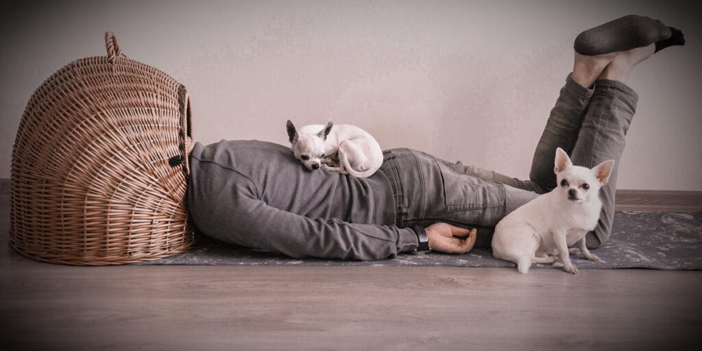 Beratung Hundekauf Mann mit Kopf in einem Weidekorb erschöpft zwei kleine Hunde sitzen auf Rücken