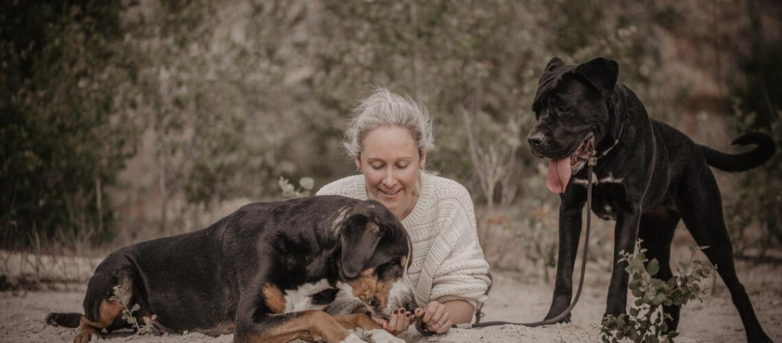 Melli Hund frisst aus Hand andrer Cane Corso schaut zu