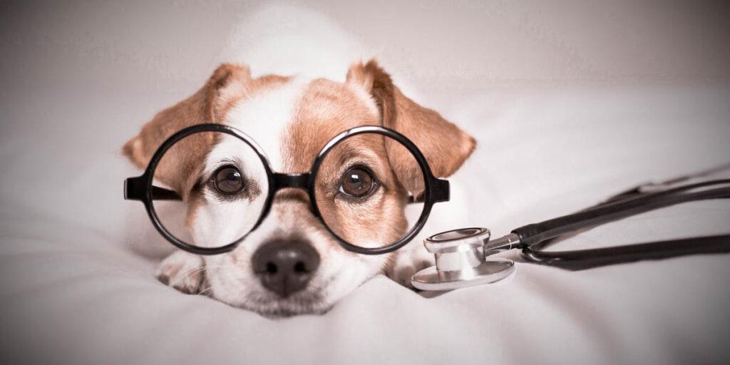 Hund Brille Erste Hilfe Stethoskop