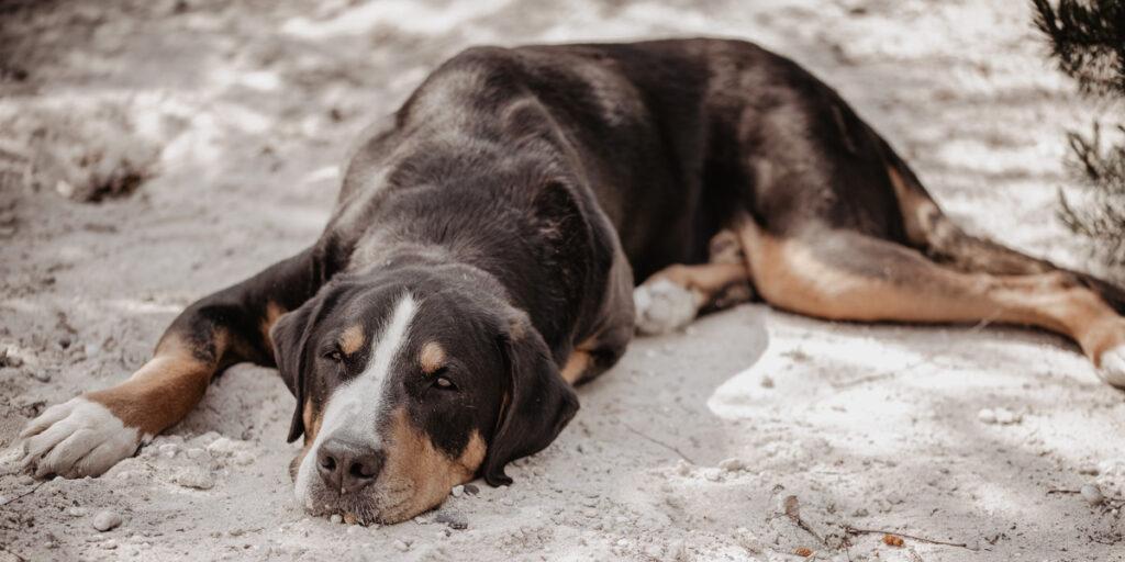 Ruhe und Wouhlfühlen entspannter Hund im Sand