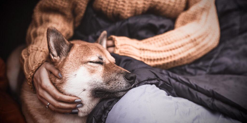 Workshop Wohlfühlteam Mensch-Hund entspannter Hund lehnt sich an Oberschenkel Frau behutsam im Arm