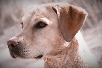 Tierschutz Coaching Ausland Hund Dahmen Melanie Mensch Hund